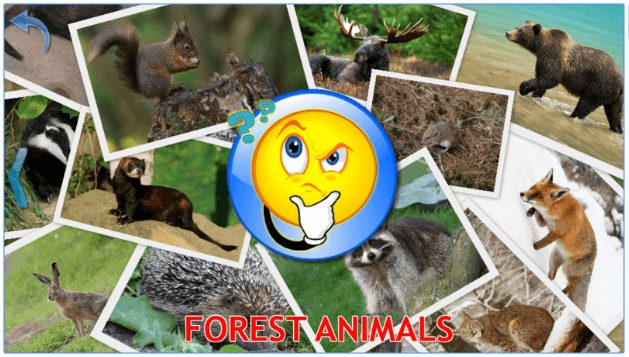 Animals for Kids, Planet Earth Animal Sounds app